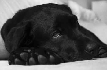 Oración A San Lazaro Para Perros Enfermos