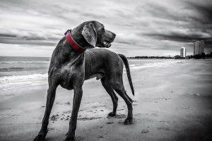 oracion para encontrar perros